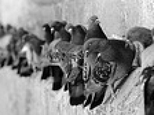 Dispositif anti-pigeons